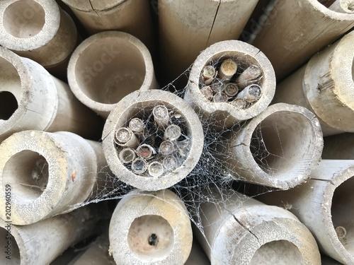 Bambu Seco Cortado Stock Photo And Royalty Free Images On Fotolia - Bambu-seco