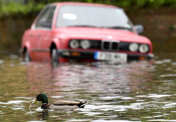 A duck paddles past a car parked along a flooded street adjacent to the Thames after the river burst its banks following heavy rain in London