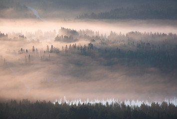 Poster Morning with fog Misty summer morning