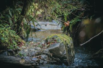 Forest Creak