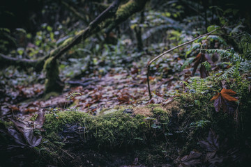 Forest Floor