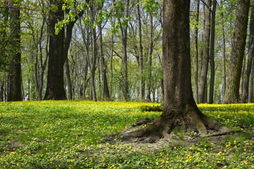 Landscape. Old tree trunk