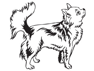 Decorative standing portrait of Longhaired Chihuahua vector illustration