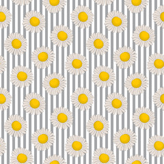 Seamless pattern with chamomiles on a striped background. Summer background with flowers. It can be used for websites, packing of gifts, registration of notebooks, fabrics, wallpapers. Vector