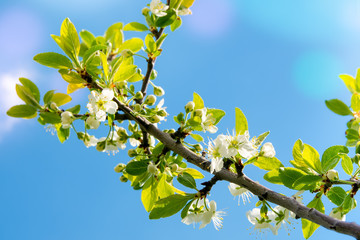 twig flowering tree against the blue sky in the spring