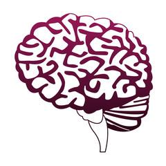 Human brain isolated vector illustration graphic design