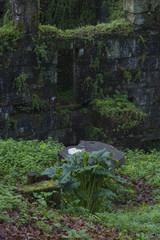 Garden and lilies in Pontevedra (Spain)