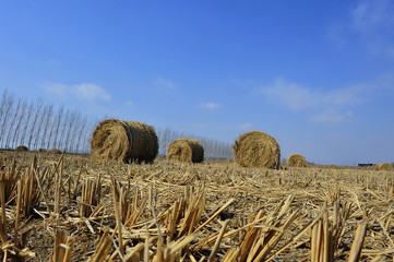 Dry straw group