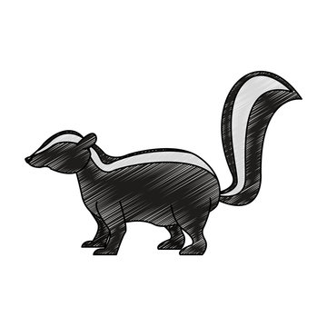 Skunk wild animal vector illustration graphic design