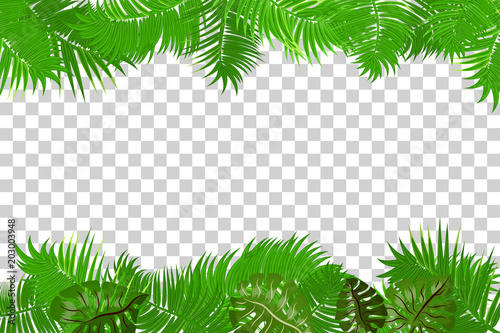 Web Summer Jungle Frame Banner Green Palm Leaves Template Isolated Transpa Background Vector Abstract Ilration Realistic Picture Tropical
