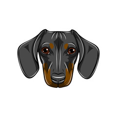 Dachshund portrait. Dog face, head, muzzle. Dachshund breed. Vector.