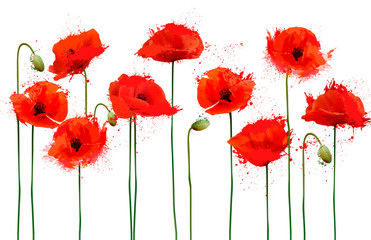 Wall Mural - Abstract beautiful background with red poppies flowers. Vector.