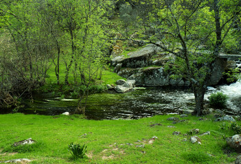 Forest landscape with river and stones