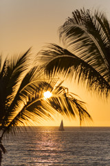 Sail boat at orange sunset and palm trees in Puerto Vallarta, Mexico