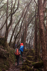 Group of people hikers walking in fog jungle Rhododendron forest