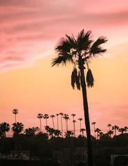 Silhouette Palm Tree Sunset