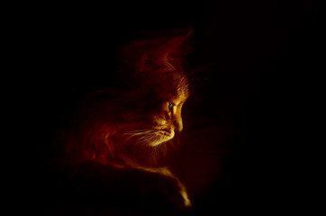 art photo of a cat with backlight on black