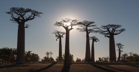 Soleil couchant sur l'allée des Baobabs