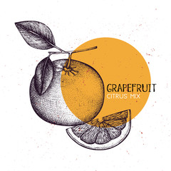Pomelo vintage design template. Botanical illustration with engraved citrus fruit. Vector grapefruit drawing.