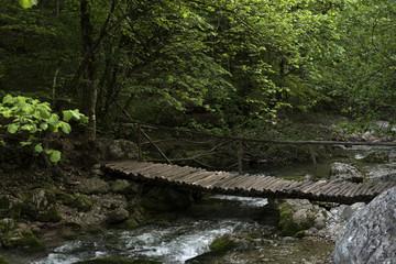 Photo sur Toile Rivière de la forêt the timbered bridge in the wood