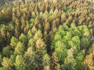 Aerial view of forest in evening sunlight, warm colors, in Switzerland