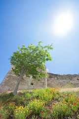 Vieste, Italy - A tree rising towards the sun at the historic fortress of Vieste