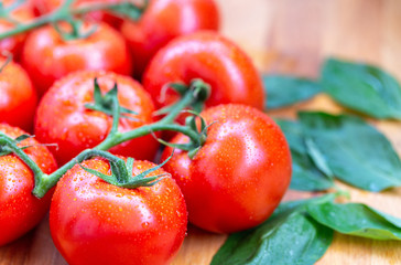 Tomatoes with water drops 6