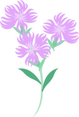 The illustration of dianthus