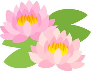 The illustration of lotus