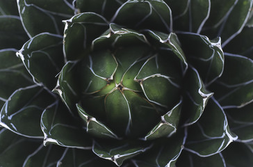 Closeup of a green succulent plant
