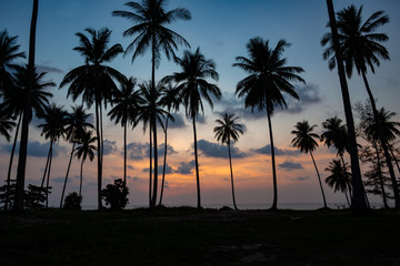 Tropical sunset with palm tree silhouette at beach,Thailand