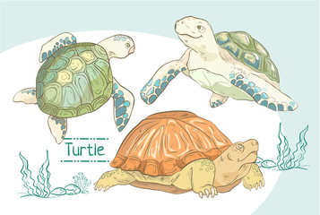 Set of hand drawn turtles.