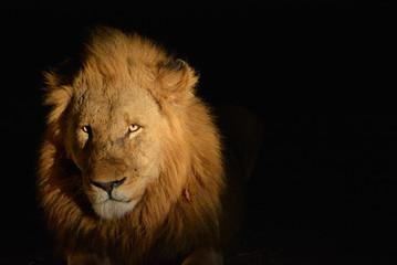 Lion @ night