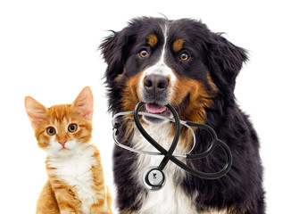 Wall Mural - dog veterinarian and cat
