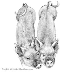 Cute piglet. Pig hand drawn pencil sketch illustration