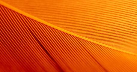 Orange feather as an abstract background