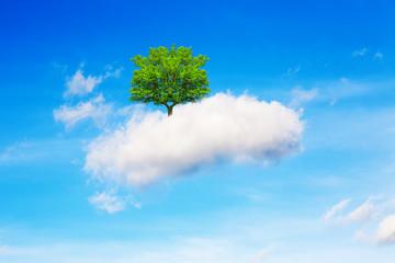 Tree, cloud and sky