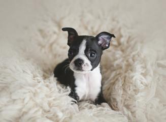 Portrait of puppy sitting on rug