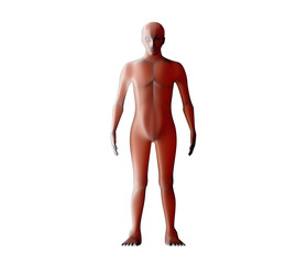 Anatomy of male muscular system. Red human wireframe hologram. 3d illustration