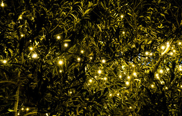 Wall Mural - background of an illuminated green bush with many golden lights
