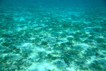 Beautiful view of dead coral reefs. Underwater world.Turquoise water and white sand. Maldives, Indian Ocean. Beautiful nature landscape background