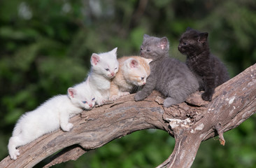 five kittens outdoors