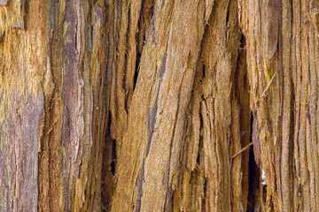 old yellow bark