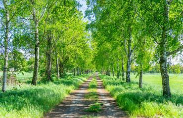 Birkenwald Weg