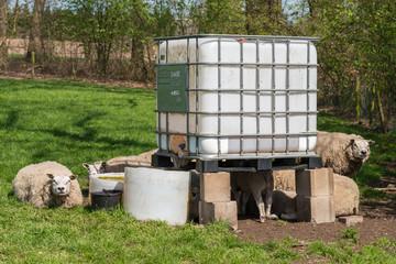 Inter mediate bulk container as sheep hotel
