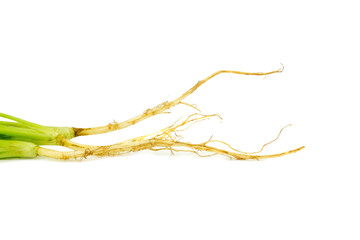 Coriander Root. isolated on white background