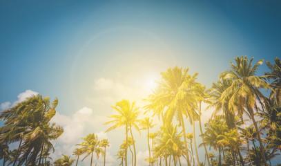 sunshine and palm trees - palm tree and blue sky background