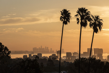 Silhouetted palm trees at sunset, Los Angeles, California, USA