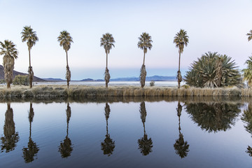 Symmetry of palm trees reflecting on lake
