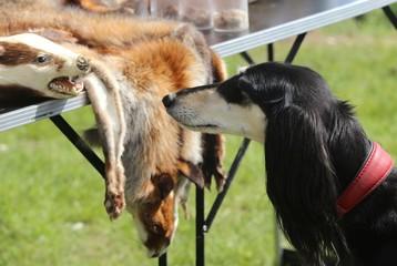 Hund und Marder